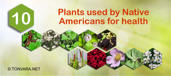 10 plants used by Native Americans for decades to improve their health