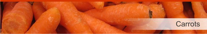 Image of carrots from a list of 20 foods with a near zero calories count
