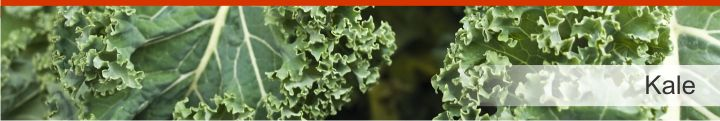 Image of kale from a list of 20 foods with a near zero calories count