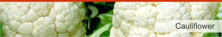 Image of cauliflower from a list of 20 foods with a near zero calories count