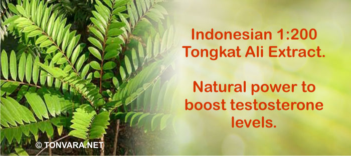 Tongkat Ali potent testosterone booster - tonvara.net